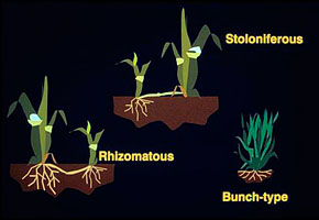 Different types of grasses