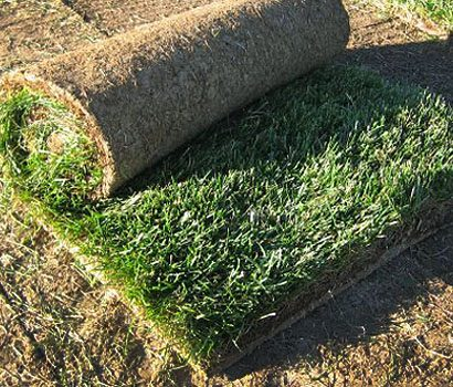 rocky-mountain-sod-growers-sod-denver-colorado