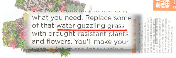 Turf Grass Doesn't Waste Water